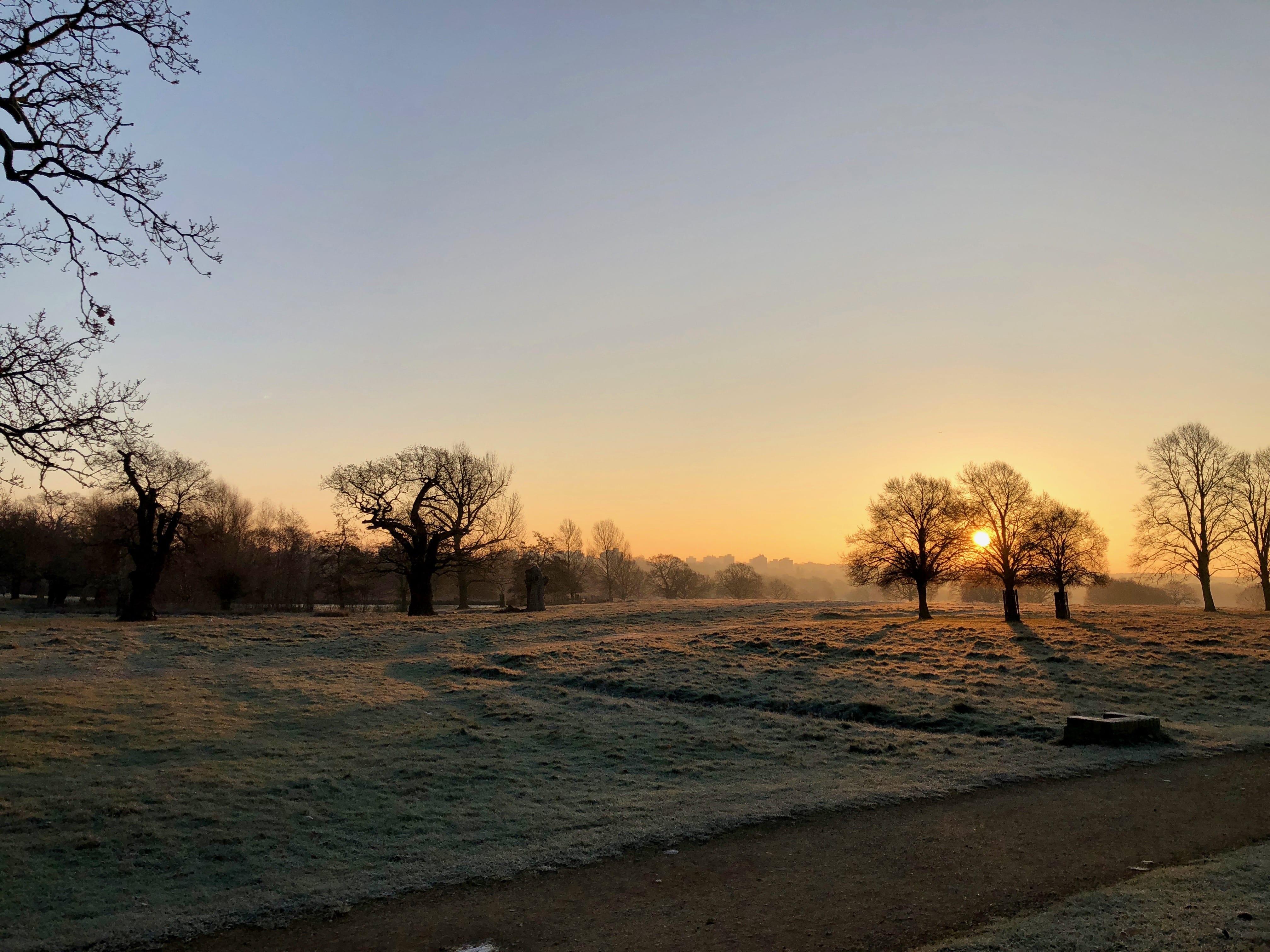 Richmond Park frost
